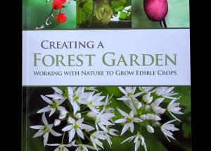 la creazione di un giardino foresta